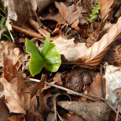 """... über die ersten beiden Blätter (""""mein kleiner grüner Schmetterling"""")"""